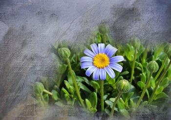 flower-729814_640.jpg